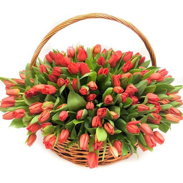 101 красный тюльпан в корзине — Тюльпаны