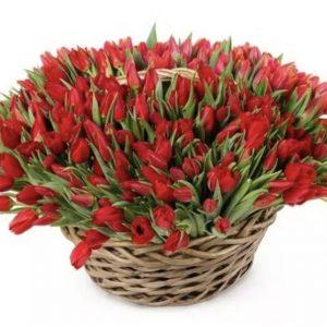 75 тюльпанов в корзине