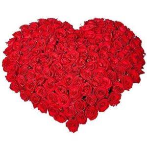 Сердце из 101 красной розы