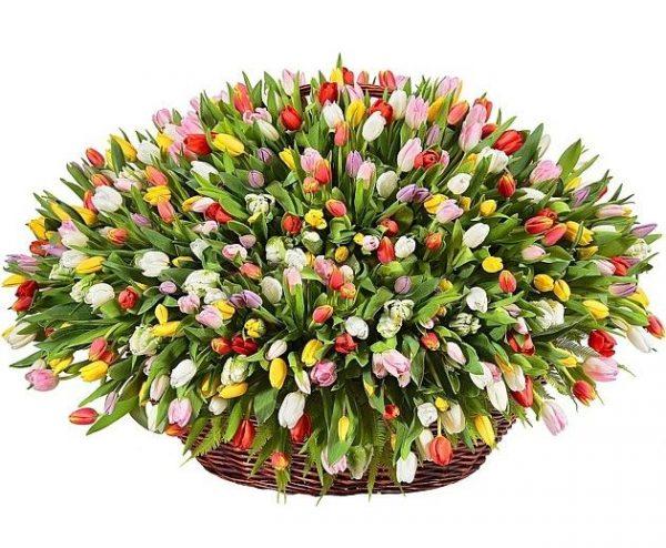 Огромный букет тюльпанов 501 шт