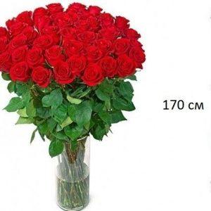 Букет из 51 розы 170 см