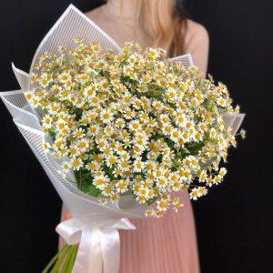 Букет из 51 ромашки — Букеты цветов