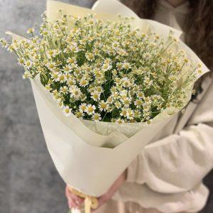 Букет из 11 ромашек — Букеты цветов