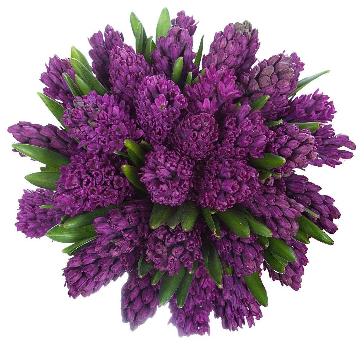 мире целом гиацинт фото букет цветов можно