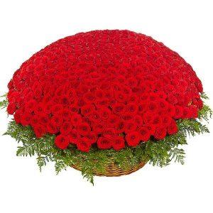 Букет из 501 красной розы — Розы
