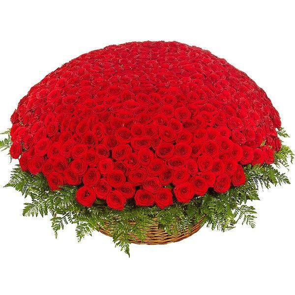 Большой букет из 501 красной розы