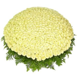 Букет из 501 белой розы — Розы