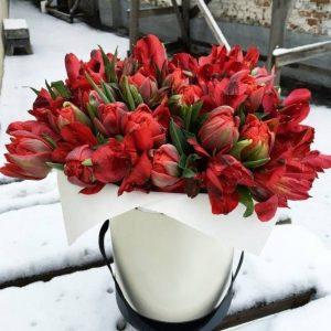 Коробка с тюльпанами и альстромериями