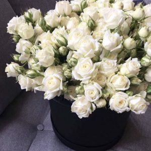 Коробка из белых роз и фрезий — Композиции