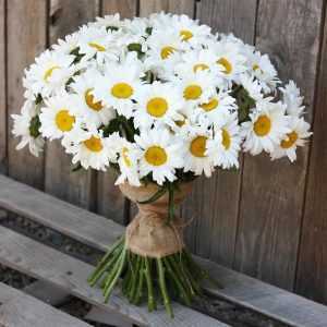 Букет из 35 крупных ромашек — Букеты цветов