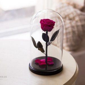 Вечная роза в колбе №6