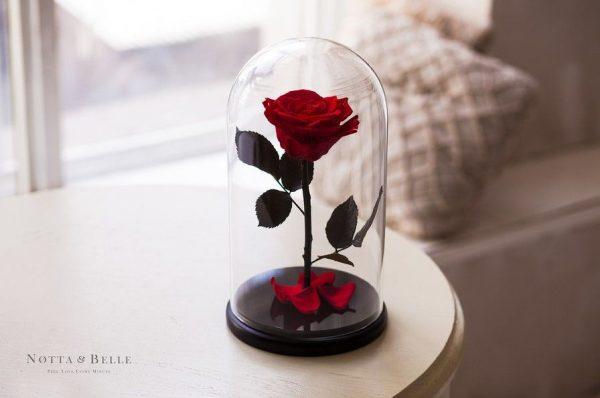 Вечная роза в колбе №13