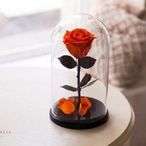 Вечная роза в колбе №24