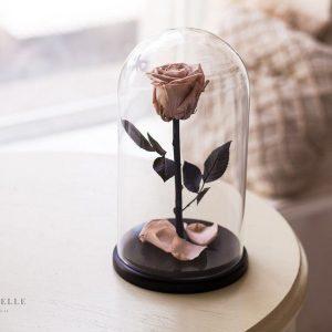 Вечная роза в колбе №25