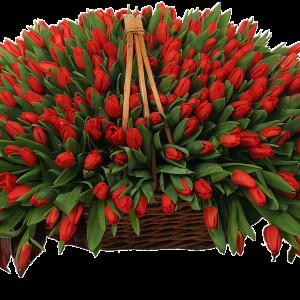 201 красный тюльпан в корзине — Композиции