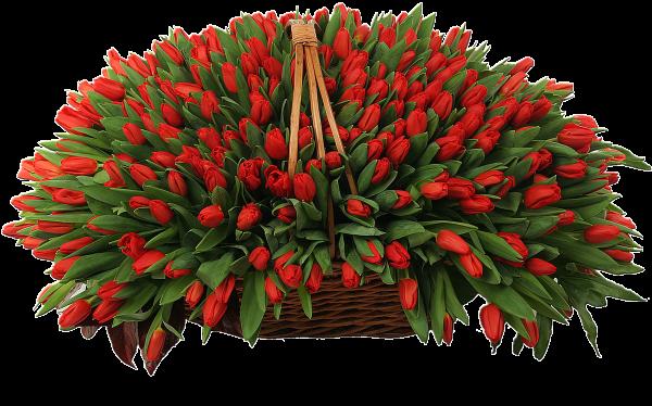 201 красный тюльпан в корзине