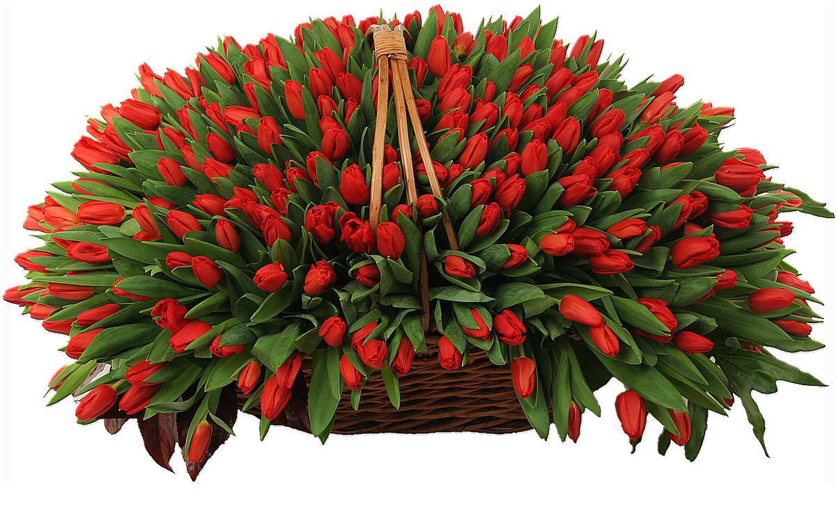 Большой букет красных тюльпанов картинки