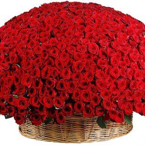 Корзина из 1001 красной розы — Композиции