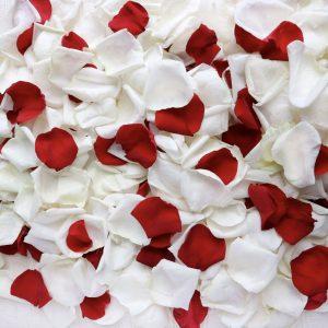 Лепестки роз красные и белые — Лепестки роз