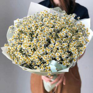 Букет из 51 садовой ромашки — Букеты цветов